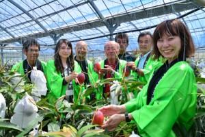 紅色に完熟したマンゴーを収穫する森田町長(左から4人目)ら=21日、天城町