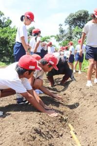 講師に教わりながら学校農園にサトウキビを植える喜界小の児童ら=10日、喜界町赤連
