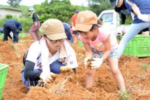 ユリ球根の掘り取り作業に励む参加者=5日、和泊町喜美留
