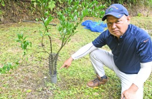 独自の保護柵を設置してタンカンの幼木を保護する松下さん=15日、同町母間