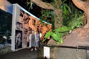 奄美群島に関する展示を楽しむ来館者=5日、奄美市笠利町の県奄美パーク