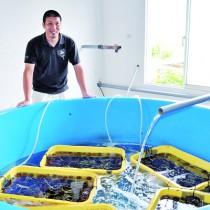 瀬戸内漁協で種苗生産に取り組む栄さんとシラヒゲウニの水槽