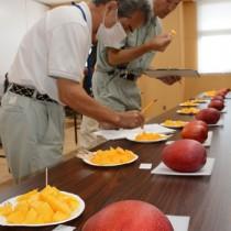 20点の出品があった沖永良部島のマンゴー品評会=5日、和泊町