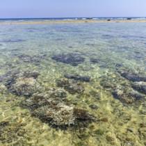 白化が確認された用海岸のサンゴ=18日、奄美市笠利町(濱田康作さん撮影)