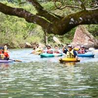 マングローブ林でカヌー体験を楽しむ生徒=23日、奄美市住用町