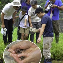 水辺の生き物を観察した参加者ら(円内は奄美群島以南に生息するハロウエルアマガエルなどのオタマジャクシ)=20日、奄美市名瀬