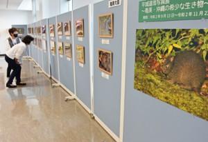 奄美空港で開催されている平城さんの写真展=26日、奄美市笠利町