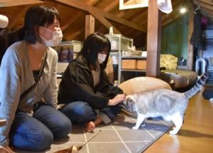 保護猫カフェで猫と触れ合う親子=2日、奄美市名瀬