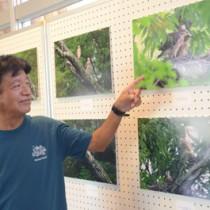 奈良県北部で撮影したサシバの幼鳥期の写真を紹介する与名正三さん=9日、宇検村湯湾の元気の出る館