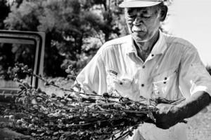 大賞に輝いた田畑さんの作品「ゴマ収穫」