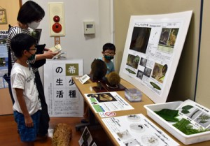 アマミノクロウサギなどの生活を紹介している企画展