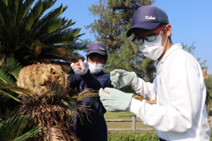 ソテツの実を収穫する支援教室の生徒=15日、喜界町池治