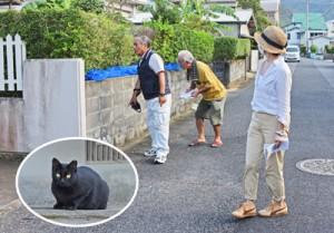 野良猫の調査を行う住民らと屋外にいた猫(円内)=29日、奄美市名瀬有屋町
