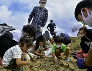 自然の防風林復活を願いアダンの実を砂浜に埋める参加者ら=18日、奄美市笠利町の用海岸