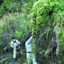 約60人で行った特定外来生物ツルヒヨドリの駆除作業=27日、瀬戸内町勝浦
