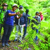 希少な植物の観察などを楽しむ参加者ら=23日、奄美中央林道