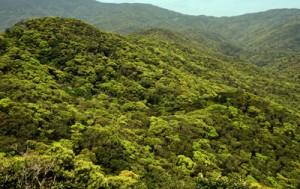 豊かな生態系を育む照葉樹の森=奄美大島
