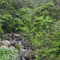 多様な動植物を育む照葉樹の森=奄美大島
