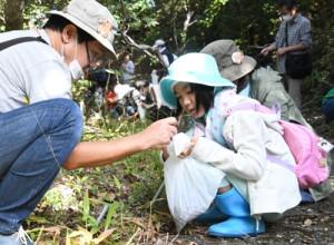 アマミトゲネズミを飼育する動物園へ送るため、シイの実を拾い集める参加者=15日、奄美市笠利町の蒲生崎観光公園