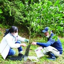 園主の指導を受け、タンカンの幼木にクロウサギの食害防護柵を設置するモニターツアー