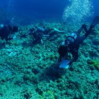 ダイビング事業者らが参加したヨロン島リーフチェック=21日、与論島の供利沖(海の再生ネットワークよろん提供)