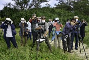 渡り鳥などの観察を楽しんだ探鳥会=3日、奄美市笠利町の大瀬海岸