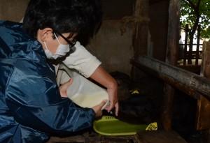 子牛への授乳を体験する参加者=28日、和泊町