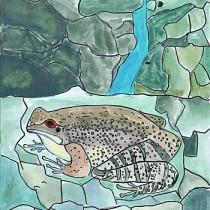 いきもの大賞に選ばれた窪田さんの「しぜんの中で生きている大きいオットンガエル」