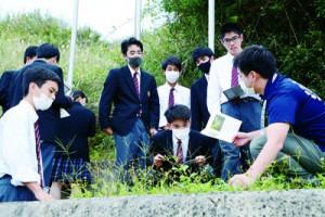 校庭を散策して身近な動植物を観察する生徒ら=1日、奄美市笠利町