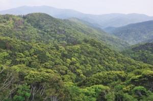 多くの希少種が生息する奄美の森
