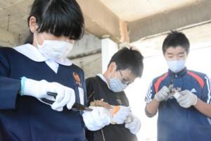 針金を使い、サンゴの苗を専用の基盤材に取り付ける児童=12日、与論町