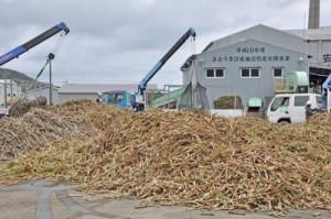 原料サトウキビの搬入が始まった富国製糖=14日、奄美市笠利町