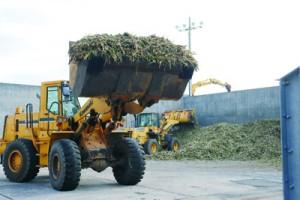 サトウキビの搬入を開始した生和糖業=18日、喜界町