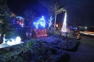 今年は大型ツリーも飾った松田さん宅庭のイルミネーション=11日、龍郷町