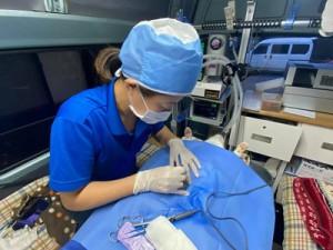 不妊手術を行う伊藤獣医師=24日、瀬戸内町加計呂麻島(提供写真)