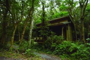 野鳥観察施設として改修予定の旧昆虫小屋=6日、龍郷町の奄美自然観察の森