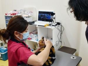 オンラインで獣医師の診察を受ける飼い猫=19日、瀬戸内町古仁屋の「ゆいの島どうぶつ病院瀬戸内病院」