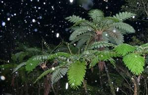湯湾岳に舞う雪=9日午前6時16分ごろ、奄美大島(浜田太さん撮影)