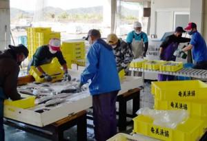 「優良衛生品質管理市場・漁港」の認定を受けた奄美漁協笠利本所の出荷作業(提供写真)
