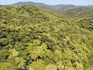 希少な動植物が息づく奄美大島の森