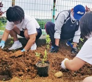 卒業記念で校庭にツツジを植樹する城ケ丘中の生徒ら(提供写真)