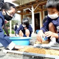 4月に行う田植えに向けて、全員で協力して種まき作業をする秋名小の児童ら=3日、龍郷町