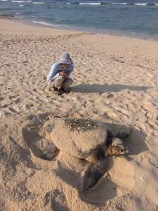 沖永良部島で今年初確認されたウミガメの産卵=26日朝、知名町(沖永良部島ウミガメネットワーク提供)