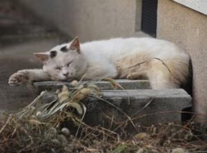 民家の敷地内でくつろぐ野良猫=2020年10月、奄美市名瀬
