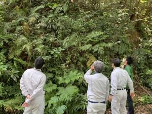 盗掘・盗採防止に向けてパトロールを行う関係者ら=1日、奄美大島(環境省提供)