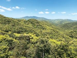 多様な動植物を育む照葉樹の森=2021年3月、奄美大島